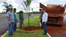 Prefeitura realiza plantio de três espécies de palmeiras em avenidas de Tangará da Serra
